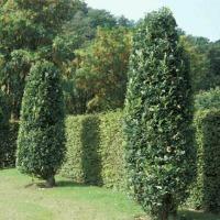 flotte træer til haven