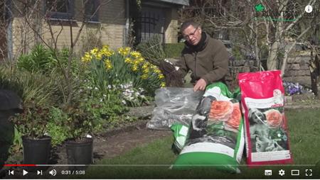 Roser til haven. Køb billige haveroser online. Se tilbud her