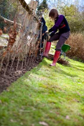 Plantning af hæk | Møbler til terrassen og haven