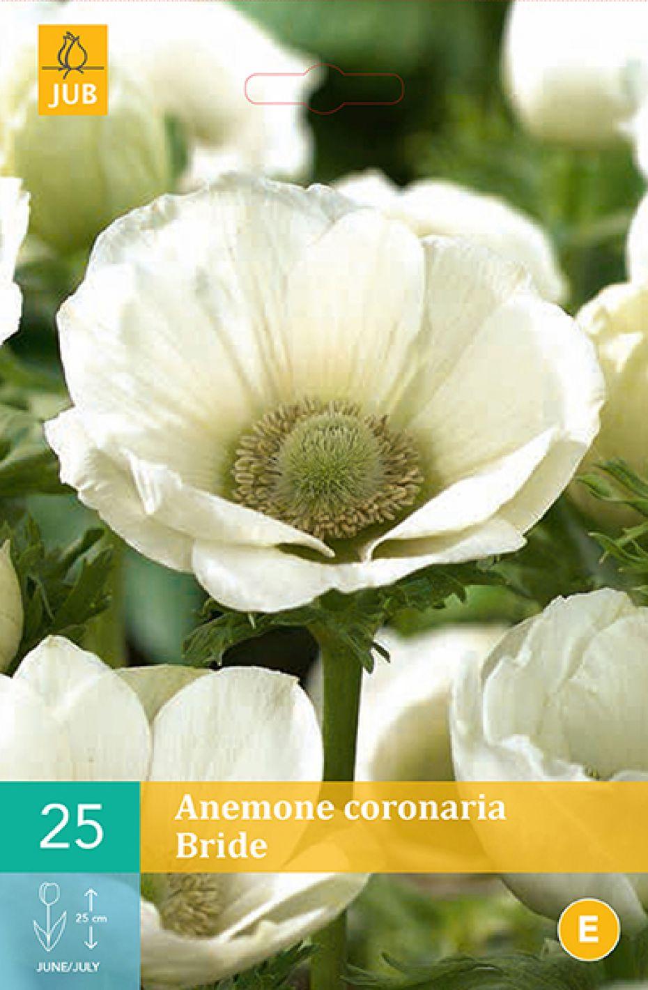 Image of   Anemone Bride (nr. 117) - Anemone Bride