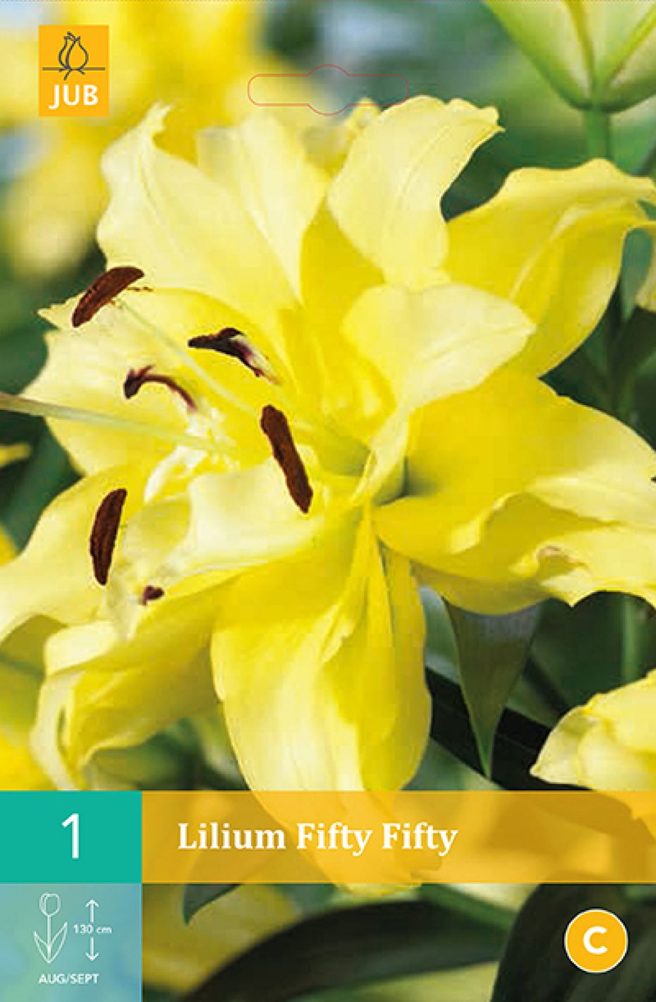 Image of   Lilje, asiatisk dobbelt Fifty Fifty (nr. 100) - Lilium Asiatic...