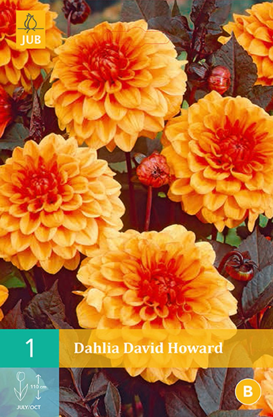 Image of   Dahlia David Howard (nr. 64) - Dahlia Classic Collection...