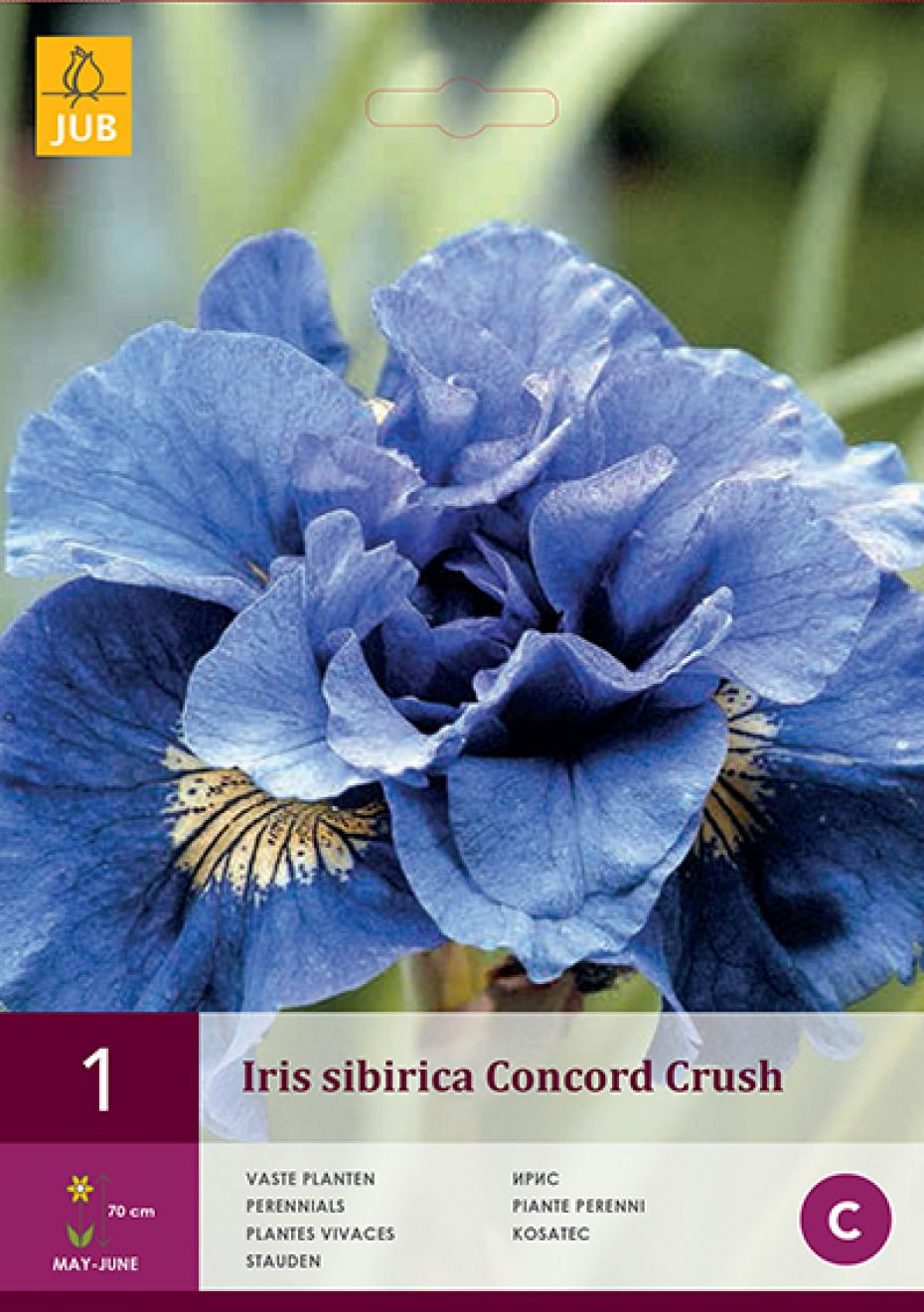 Image of   Sibirisk iris Concord Crush (nr. 185) - Iris siberica Concord...
