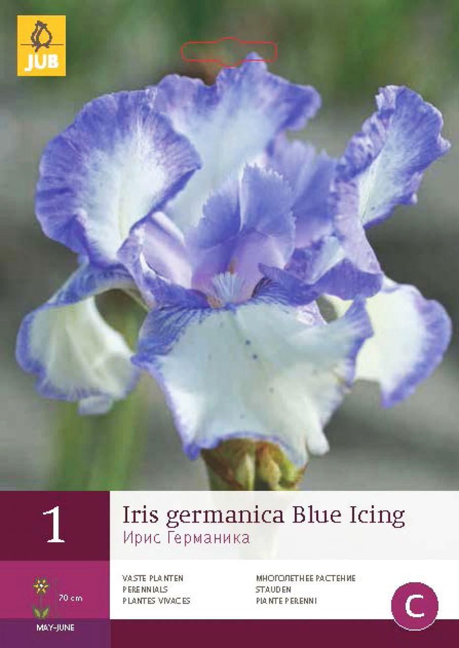 Haveiris Blue Icing - Iris germanica Blue Icing
