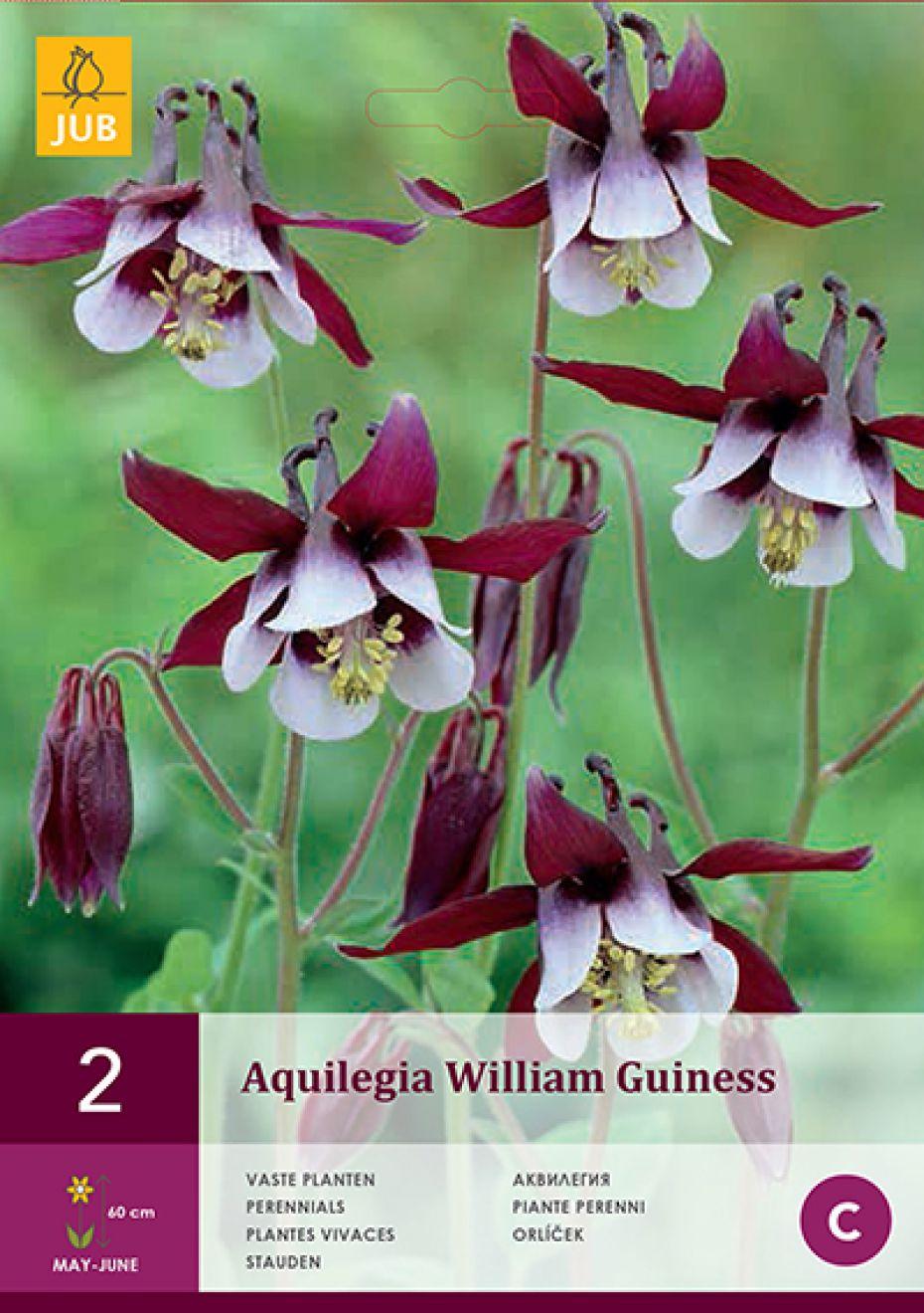Image of   Akeleje William Guiness (nr. 163) - Aquilegia William Guiness