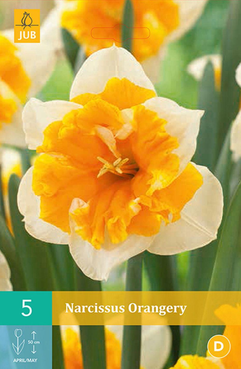 Påskelilje sommerfugl Orangery (nr. E106) - Narcissus...