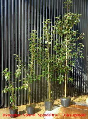 Frugttræer. køb billige frugtbuske m.m. til haven. se tilbud