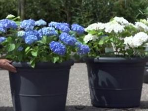 Flotte planter til havekrukker