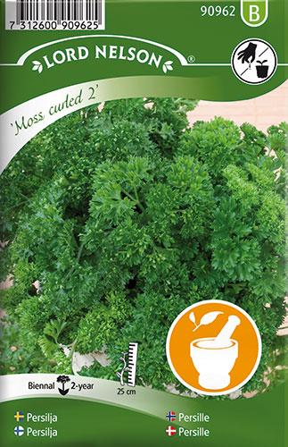 Persille, Krus-, Moss curled 2 - Petroselinum crispum