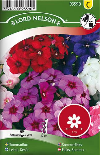 Sommerfloks, bl. farver - Phlox drummondii
