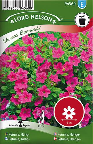 Petunia, Hænge-, Showers Burgundy - Petunia hybrida