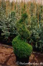Find buksbom planter til en god pris. Se alle de gode tilbud