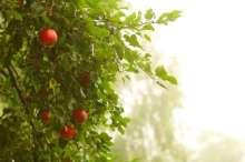 Image of   Frugtpakker til naturen - Frugtpakker til naturen