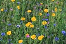 Billede af All-Round blomstermark nr. 10 - All-Round blomstermark nr. 10